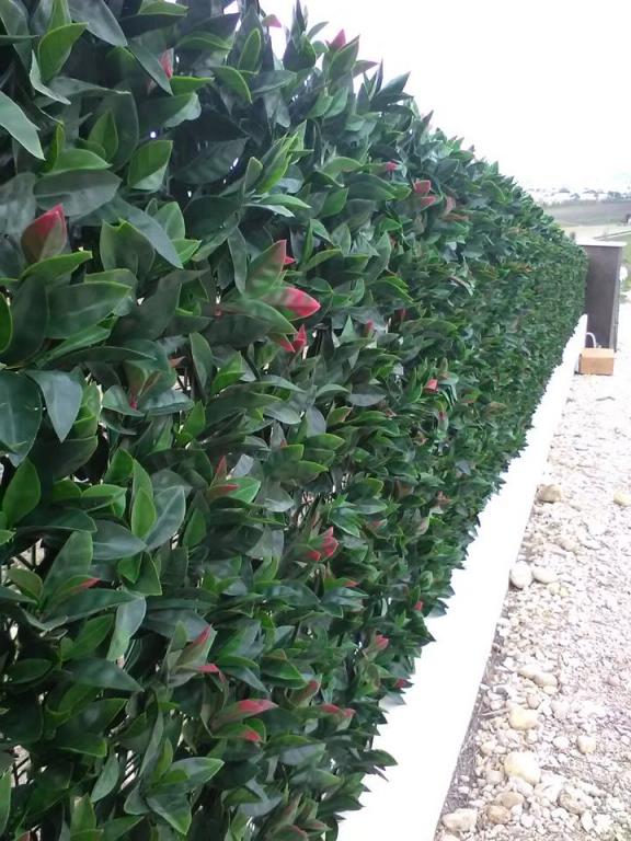 Siepe finta artificiale formato piastrella cm 50x50 con for Rete con foglie finte